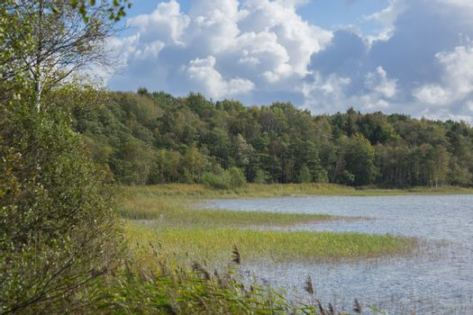 The wildly vegetated coast at the Müritz, Germany