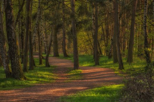 Forest path with wonderful sunlight and many trees