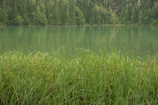 Nature shot at the Gleinkersee in Austria