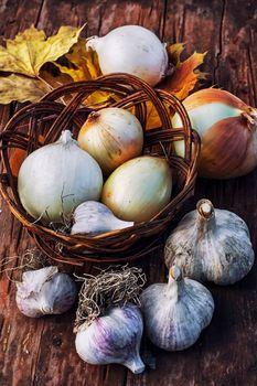 Garlic autumn harvest on wooden table