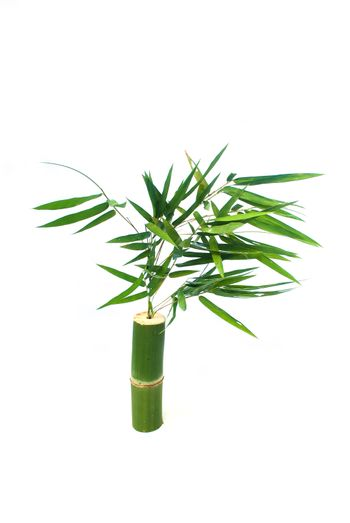Bamboo and bamboo leaves On white background.