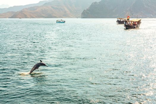 Jumping out of the water dolphin and pleasure boats in the Gulf of Oman