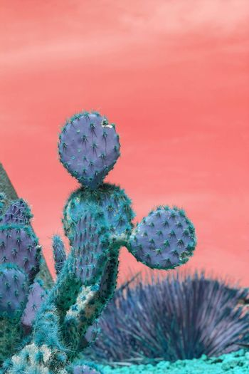 Surrealistic abstract blue thorny cactus with spikes and little fruits against pink orange sky