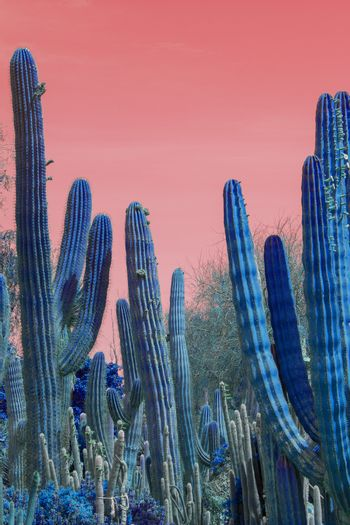 Surrealistic abstract blue glow thorny cactus in arid landscape with red sky