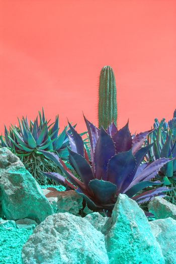 Surrealistic abstract purple color cactus and succulent plants in arid landscape with red orange sky