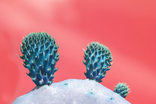 Surrealistic abstract blue thorny cactus with against pink orang