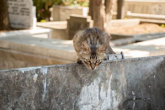 Stray cat seen in the street of the city