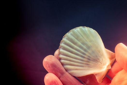 Hand holding beautiful seashell in hand on black