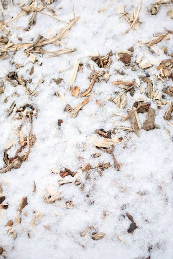 Wood pieces on white snow in the cold winter