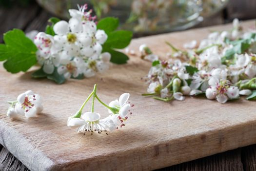 Detail of fresh hawthorn flowers on a table