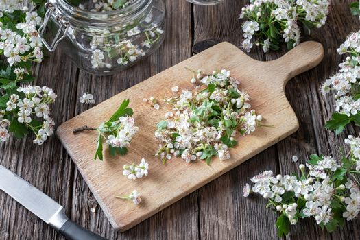 Cutting up hawthorn flowers to prepare tincture