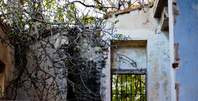 Abandoned house in ruins invaded by nature