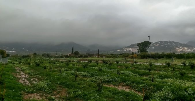 Orange trees plantation with mountains in the background on a rainy day