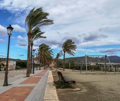 Empty park with palm tree leaves tilted on a windy day