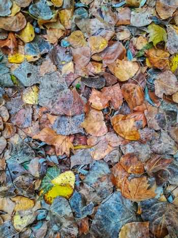 Background fallen leaves in green and brown tones