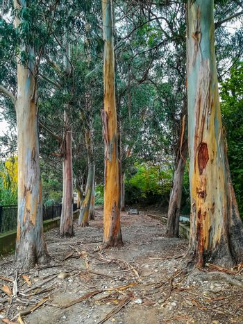Trees without bark with orange and blue tones in park