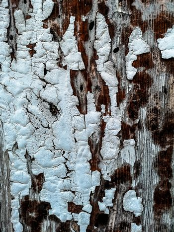 Worn wooden background with white paint