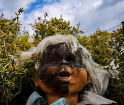 Old doll with face burned in brambles