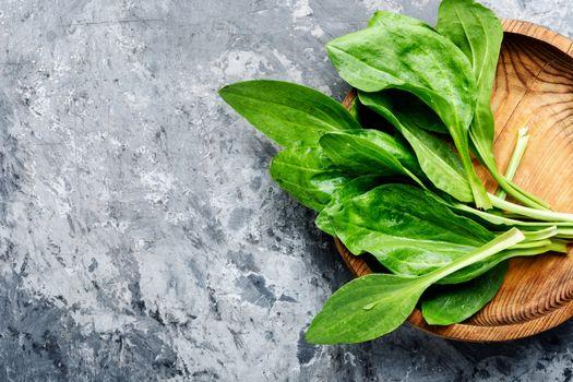 Plantain-valuable medicinal plants