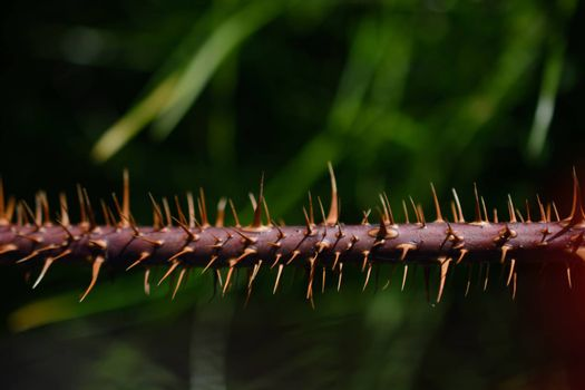 Closeup of Thorny stem of a plant in the view
