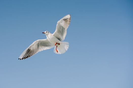 Pair of  seagulls are flying in a sky as a background