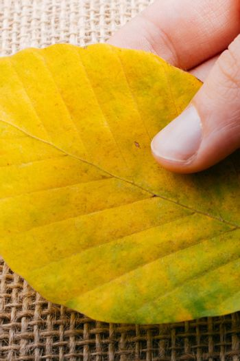 One separate dry leaf  of Autumn times in hand