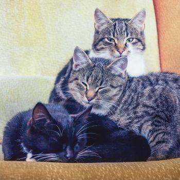 Three sleepy kittens on the chair