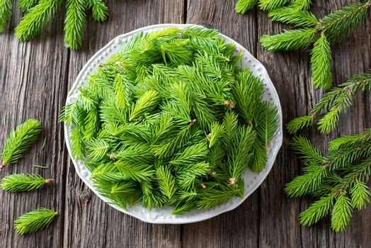 Young spruce tips collected on a plate to prepare homemade syrup, top view