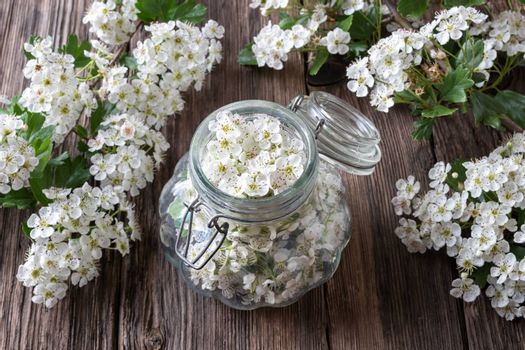 Preparation of herbal tincture for the heart from fresh hawthorn flowers