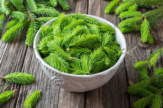 Spruce tips collected to prepare spruce syrup