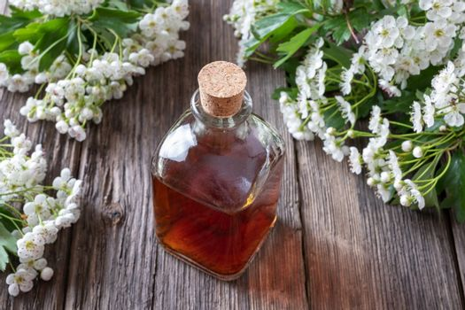 A bottle of hawthorn tincture with blooming hawthorn