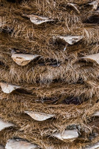 macro closeup of a hairy palm tree trunk, popular tropical tree, nature pattern background