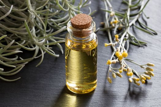 A bottle of helichrysum essential oil with blooming helichrysum italicum on a gray background