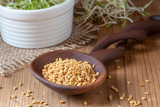 Fenugreek seeds on a spoon and fresh sprouts in the background