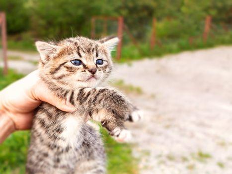 A cute little kitten in a human hand