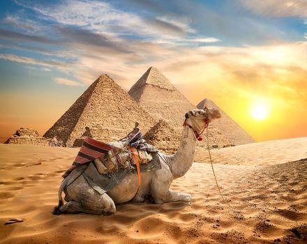 Camel and desert