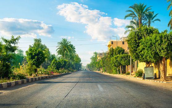 Road among palm