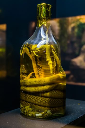 preserved snake in a bottle, educative objects for herpetology, creepy home decorations