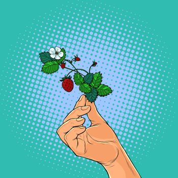 forest strawberry twig in the hands