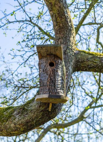 A self made bird house attached to a branch of a tree with moss during spring.