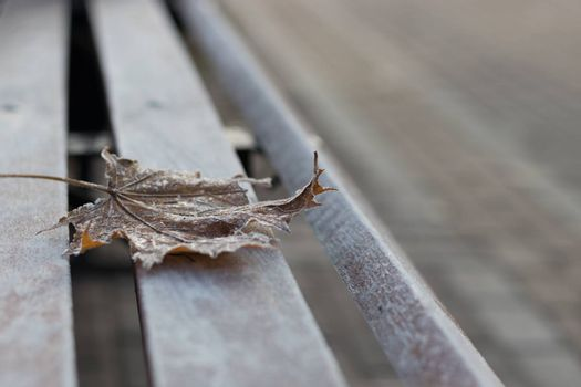 Close-up of a single autumn maple leaf covered with hoarfrost on a wooden bench
