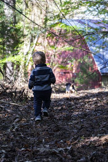 Male toddler ambles through the autumn woods toward a red barn. Seen from behind.