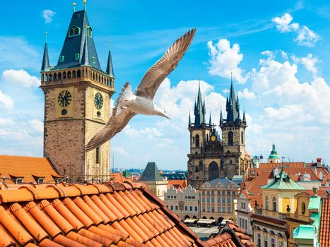 Gulls over Prague