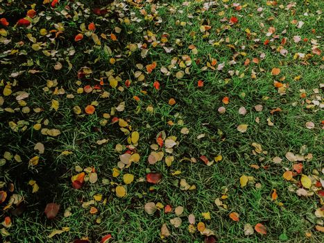 Orange and brown leaves on the grass in the park. Colorful leaves for autumn background composition. Selective focus