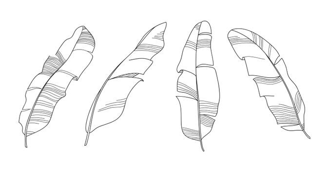 Banana leaves outline vector illustration. Black and white hand drawn line art. Set of sketch tropical leaves skeleton.