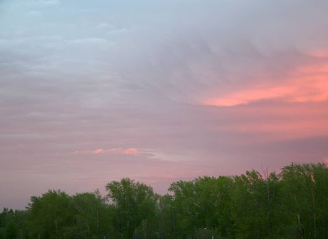 The tops of the trees against a background of clouds colored in purple by the setting sun.