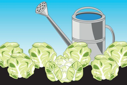 Vector illustration of ground and harvests of the vegetable cabbage in ground