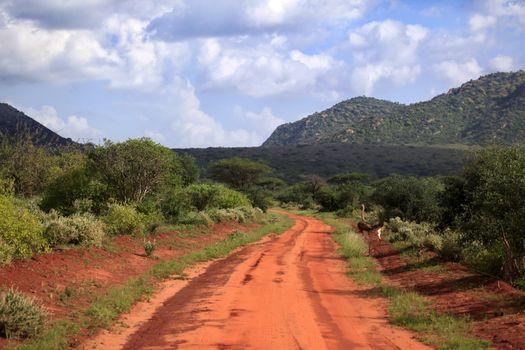 Ostrich in Tsavo East National Park, Kenia