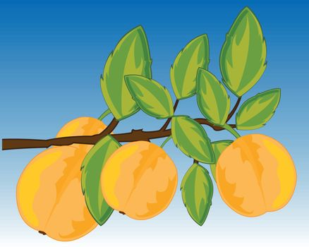 Vector illustration of the branch fruit tree plum with fruit