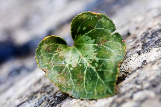 Heart leaf macro background fine art in high quality prints products